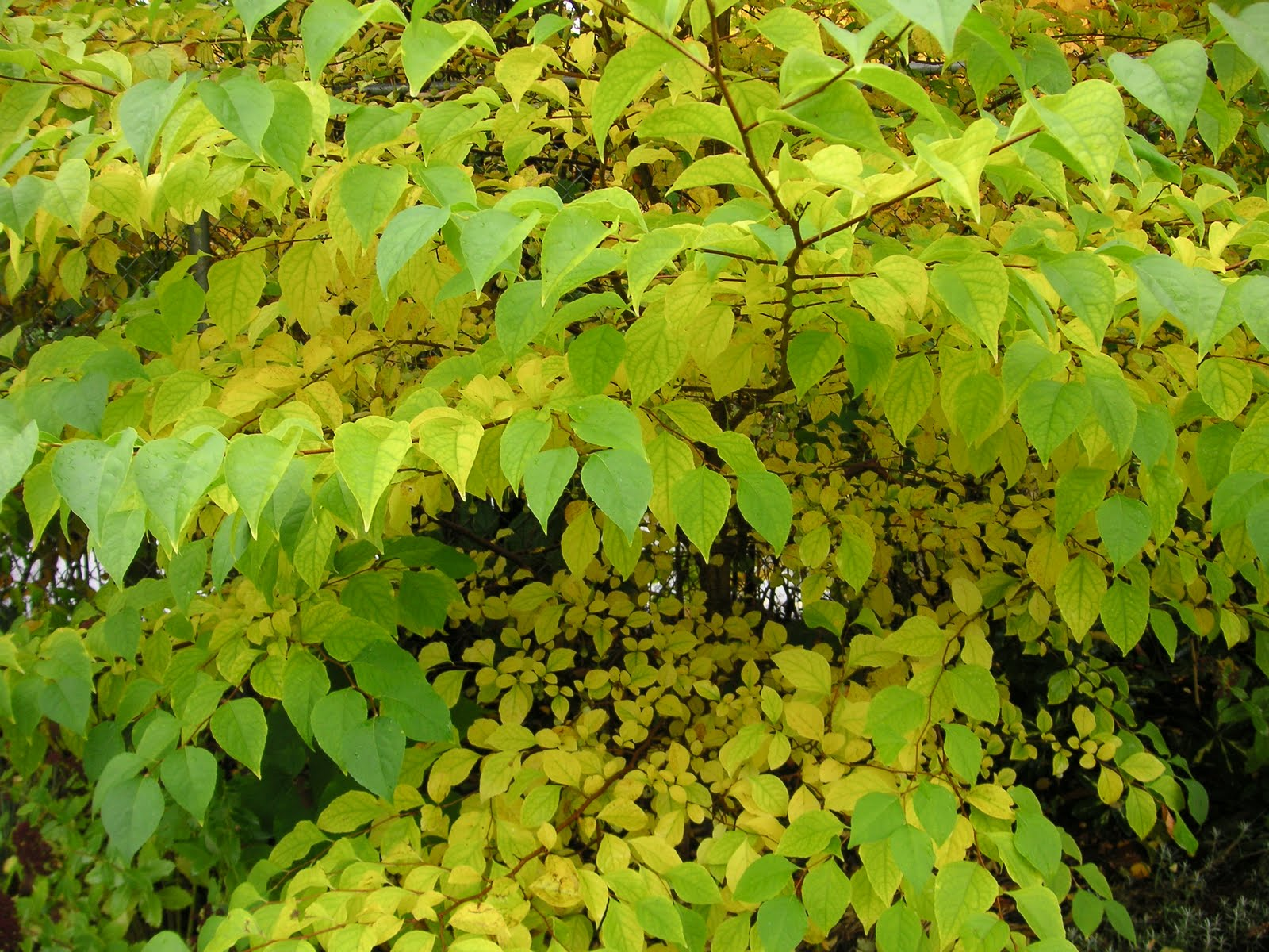I am Jealous of Fall Colour - That Bloomin\' Garden