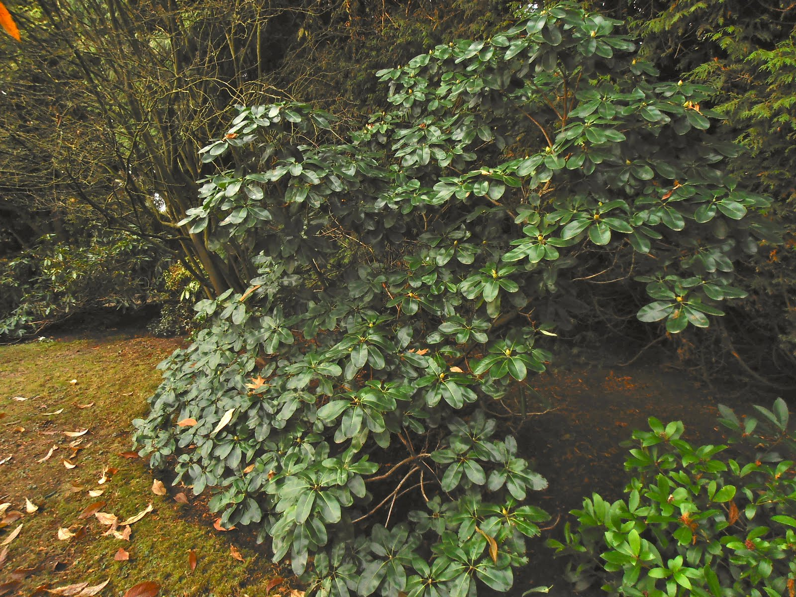 winter plants for the pacific northwest that bloomin u0027 garden