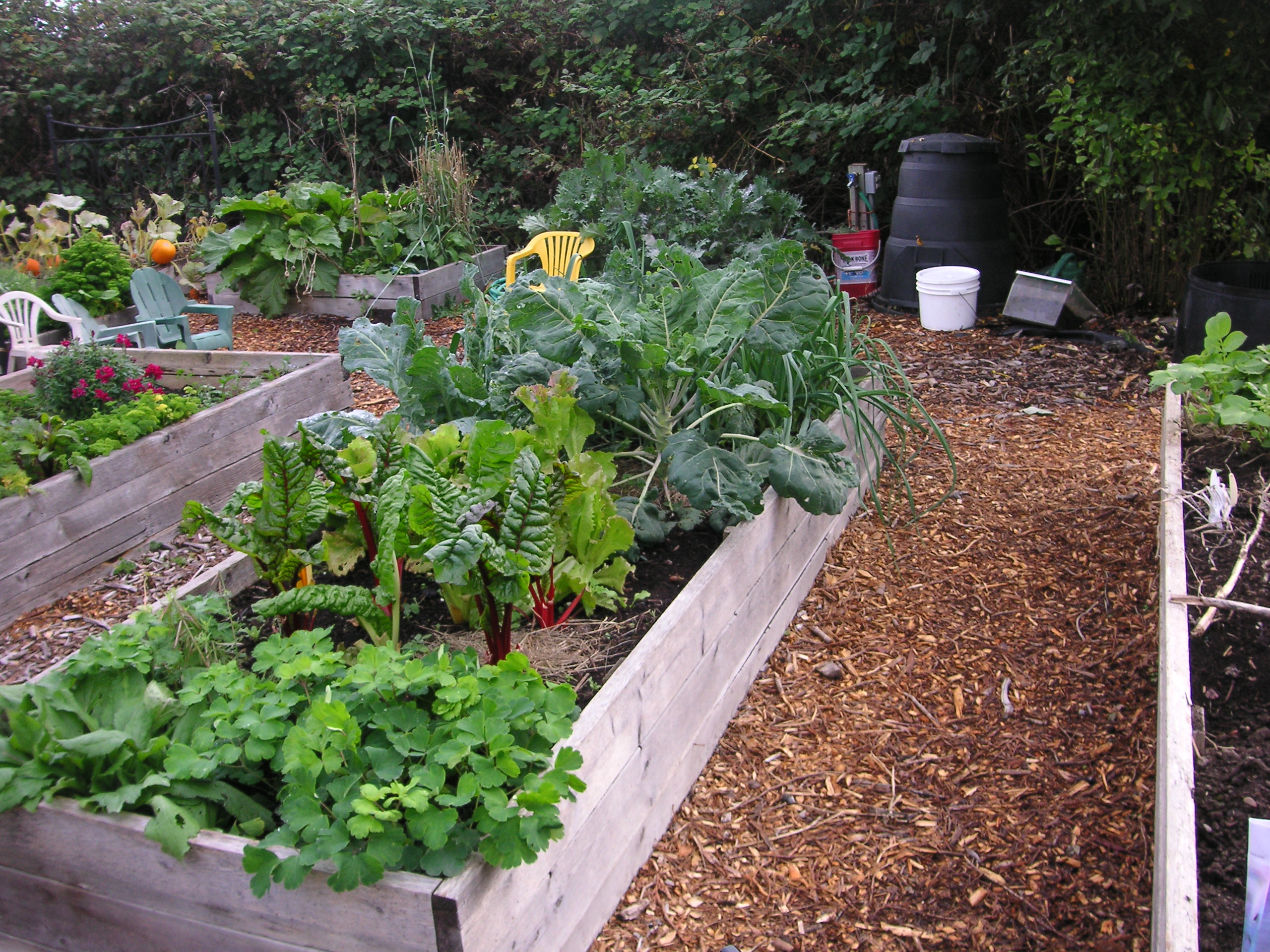 Why Every School Should Have a Garden - That Bloomin\' Garden