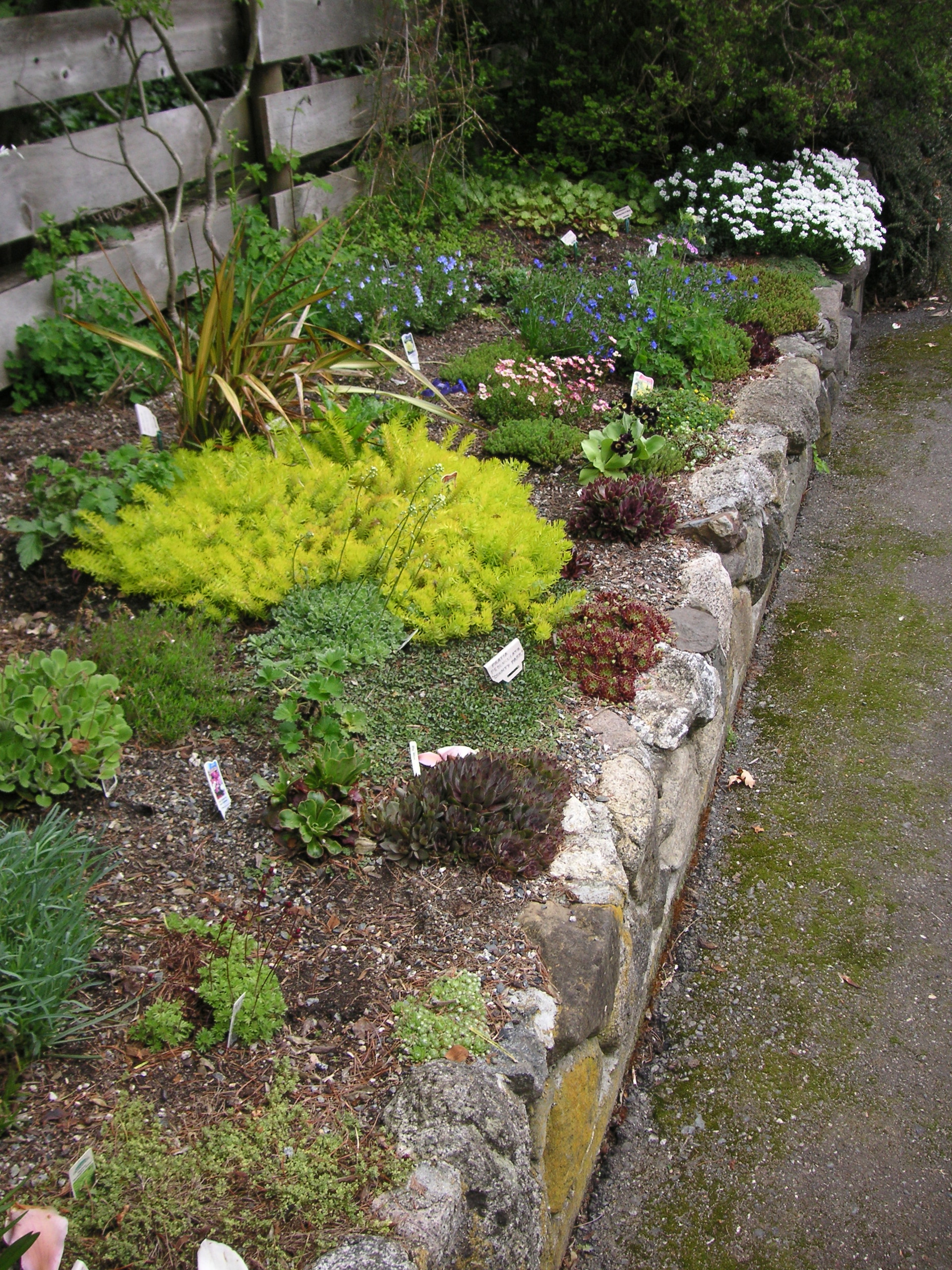 Superior Have You Ever Wanted To Build A Rock Garden? They Are Easy To Create But  Need A Lot Of Brute Strength To Move The Rocks So Invite Plenty Of Friends  To The ... Nice Look