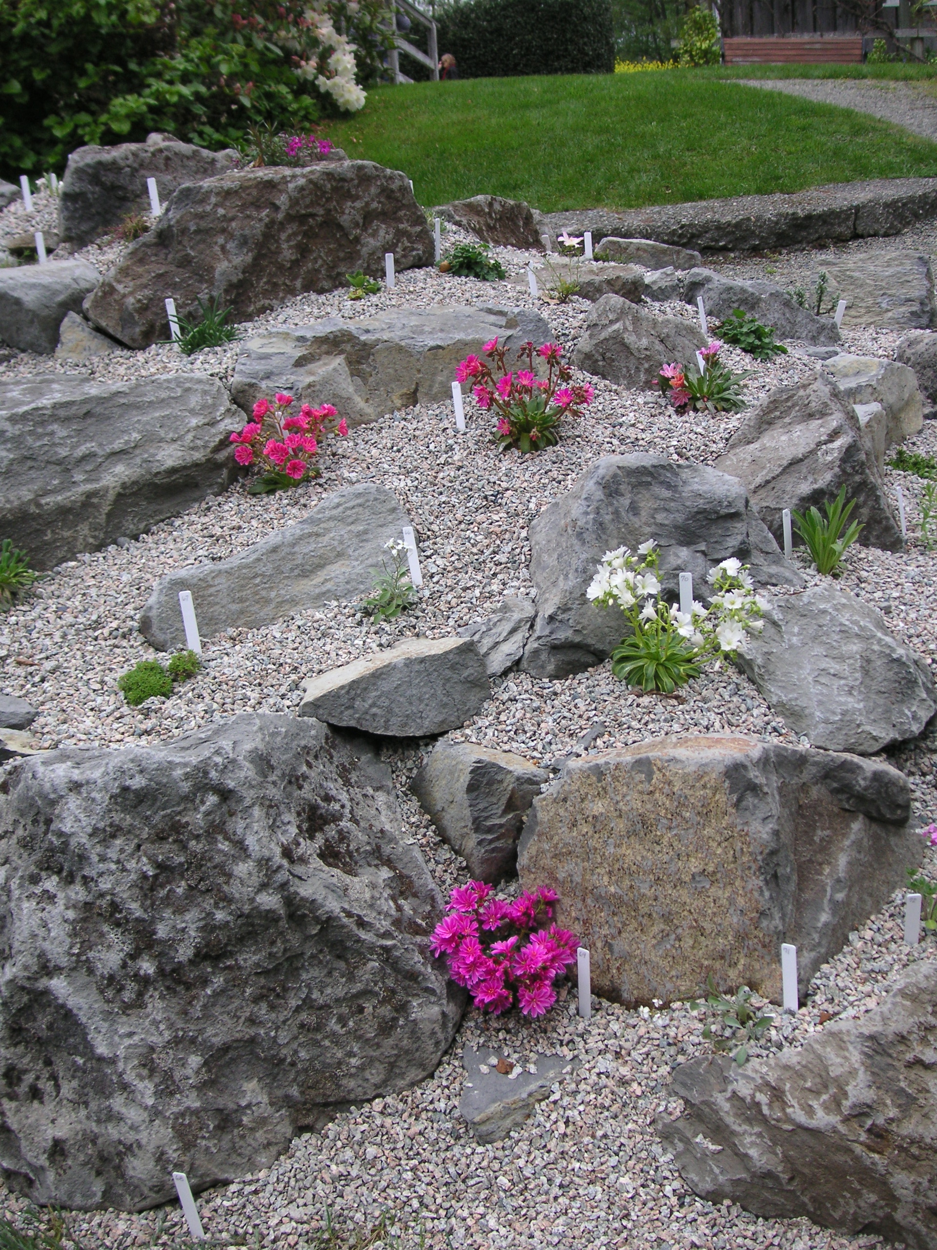 How to build a rock garden that bloomin 39 garden for How to landscape a garden