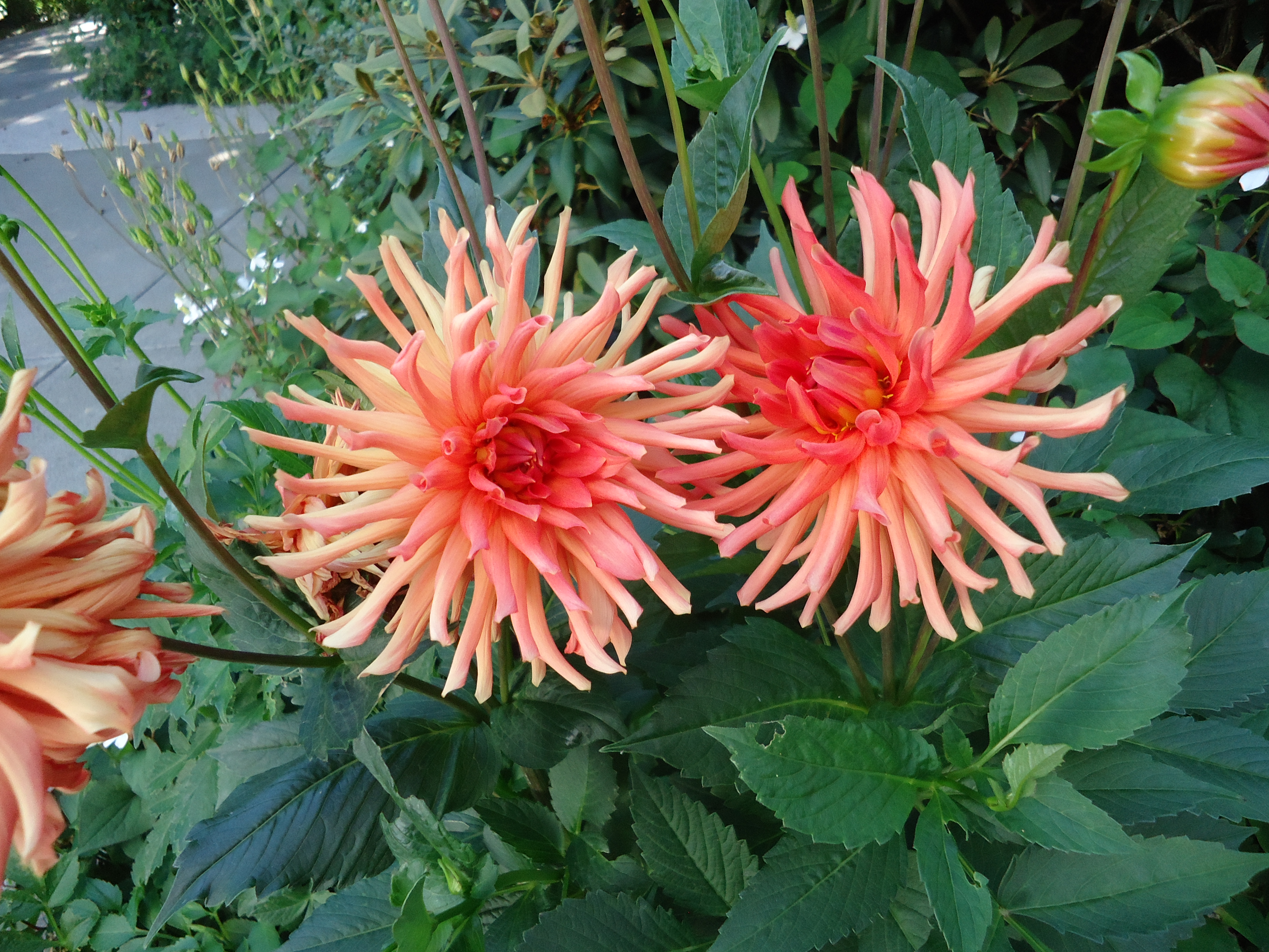 Enjoying the Hot Colours of July - That Bloomin\' Garden