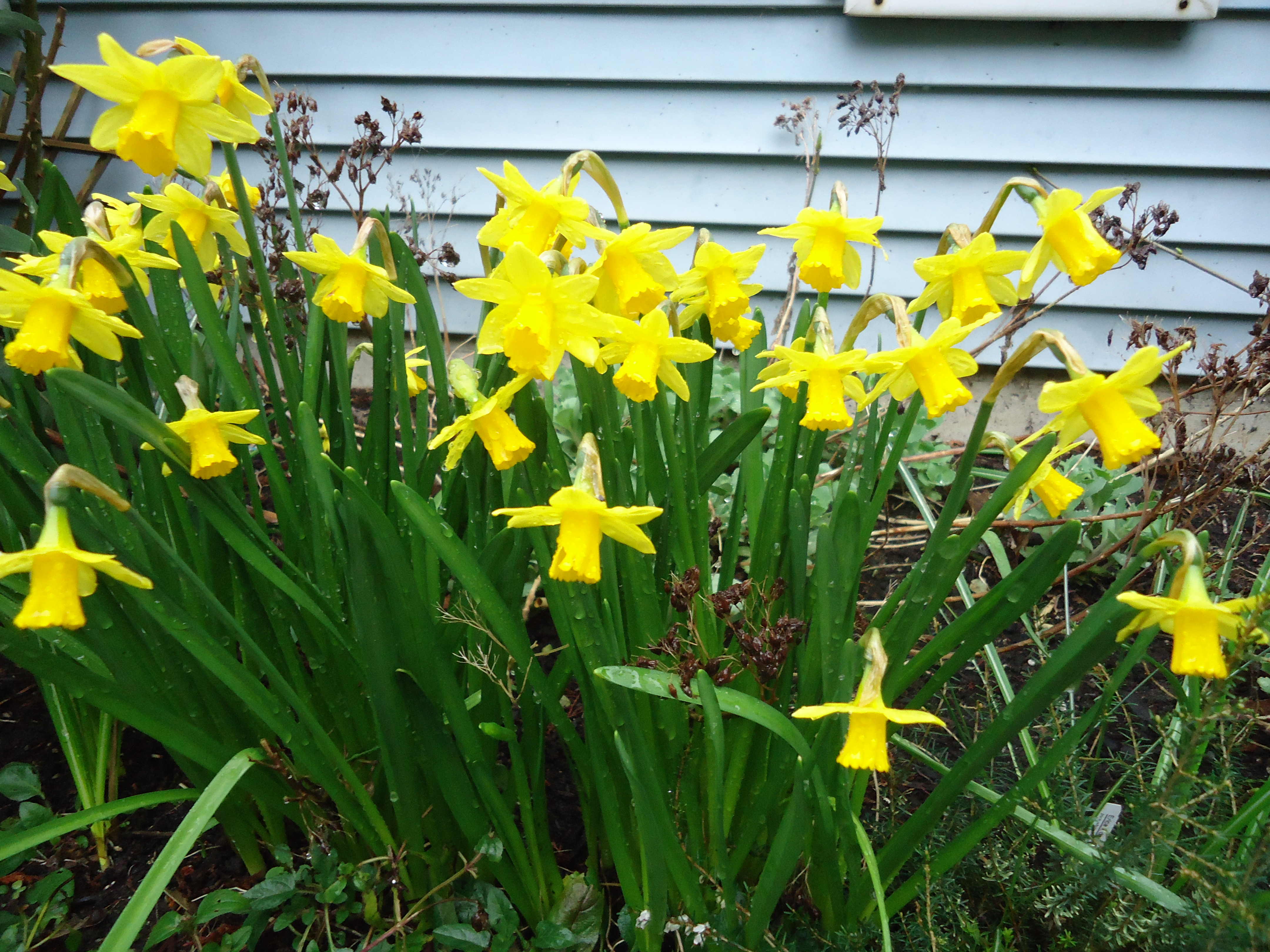 Its time to plan your spring garden that bloomin garden the bees love this plant plant bulbs in groups for visual impact over the years the crocuses will naturalize and come back stronger every year mightylinksfo