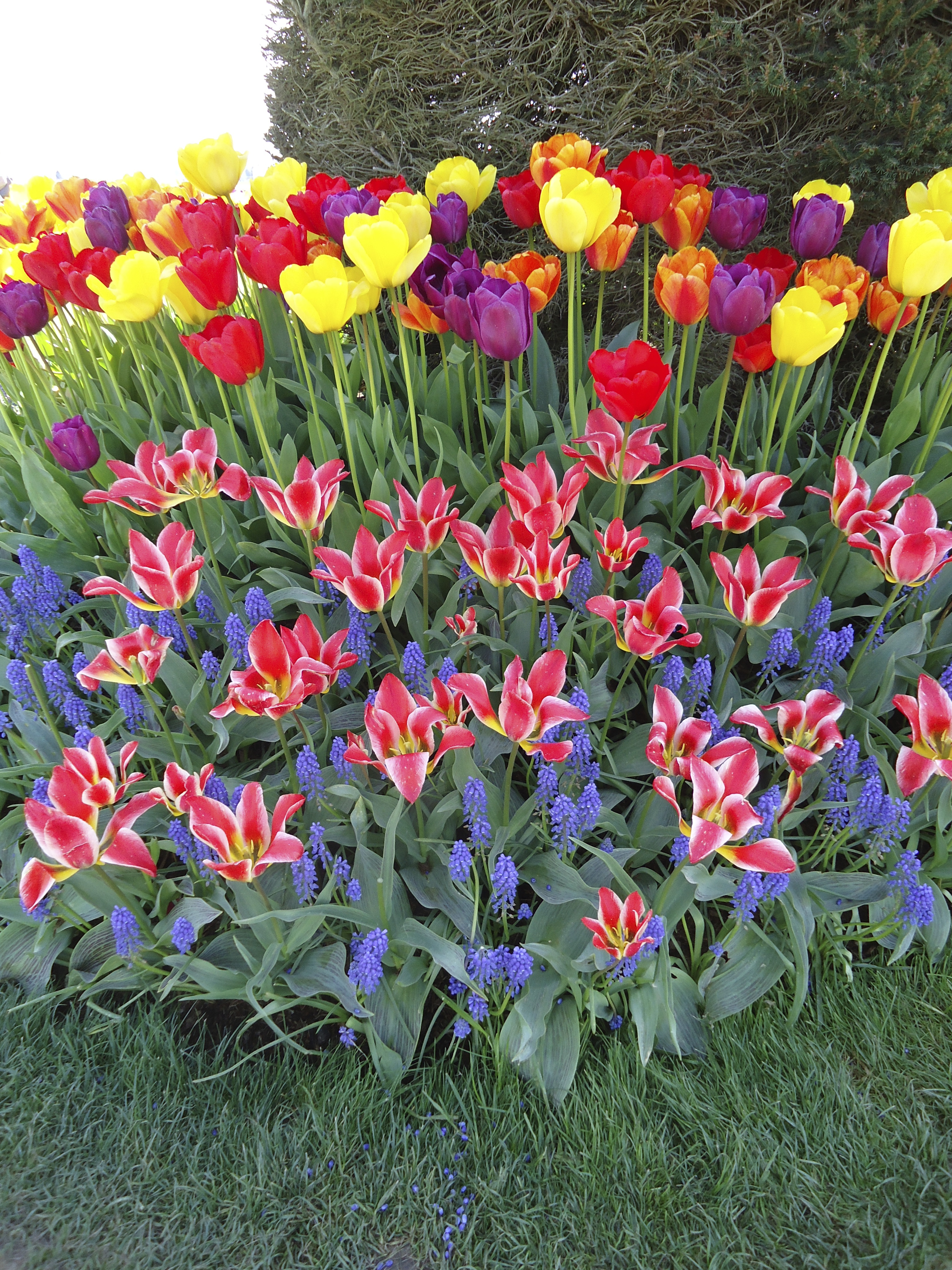 Its Time To Plan Your Spring Garden That Bloomin 39 Garden