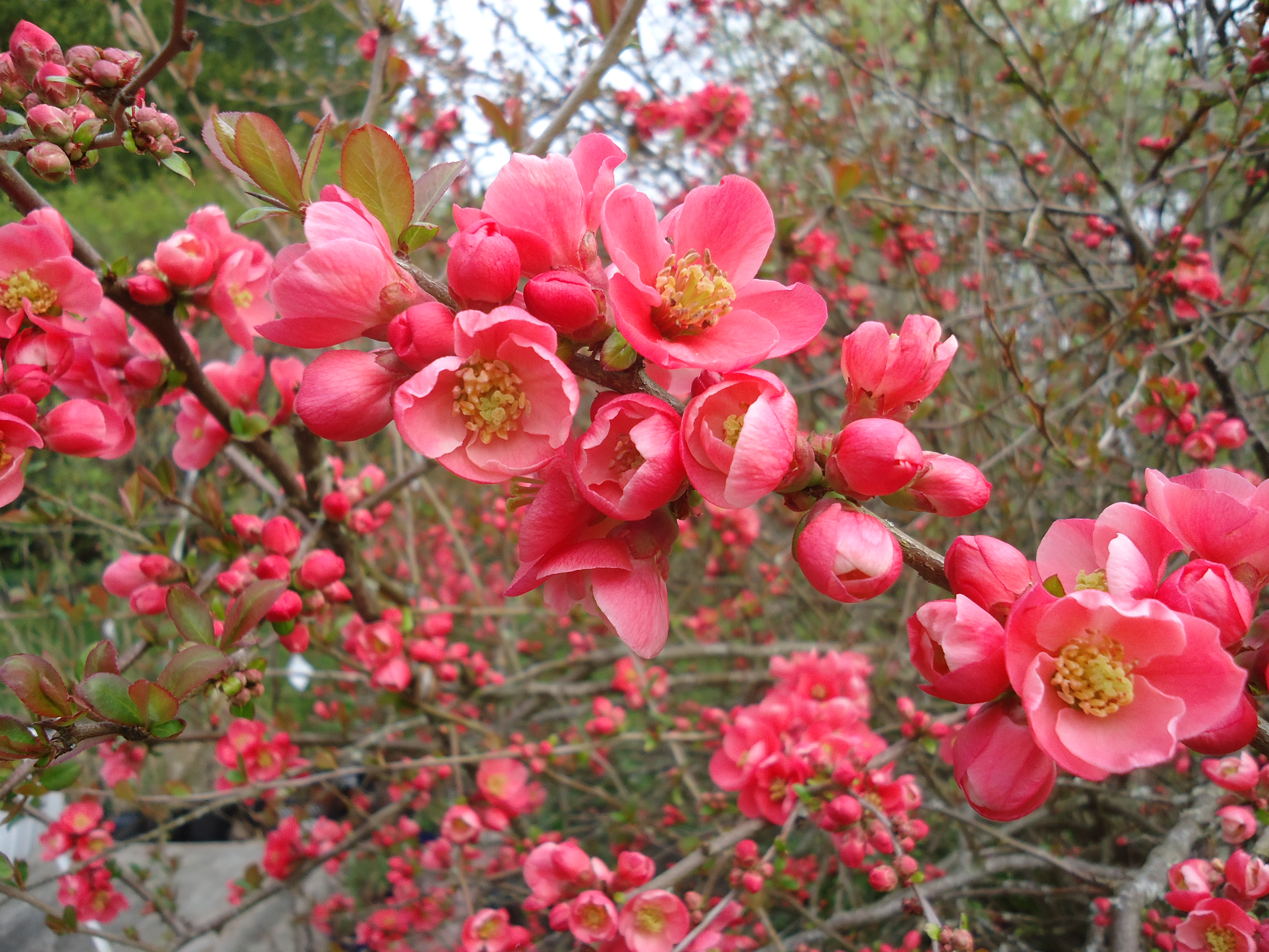 Lets Cheer For The Sight Of Spring Flowers That Bloomin Garden