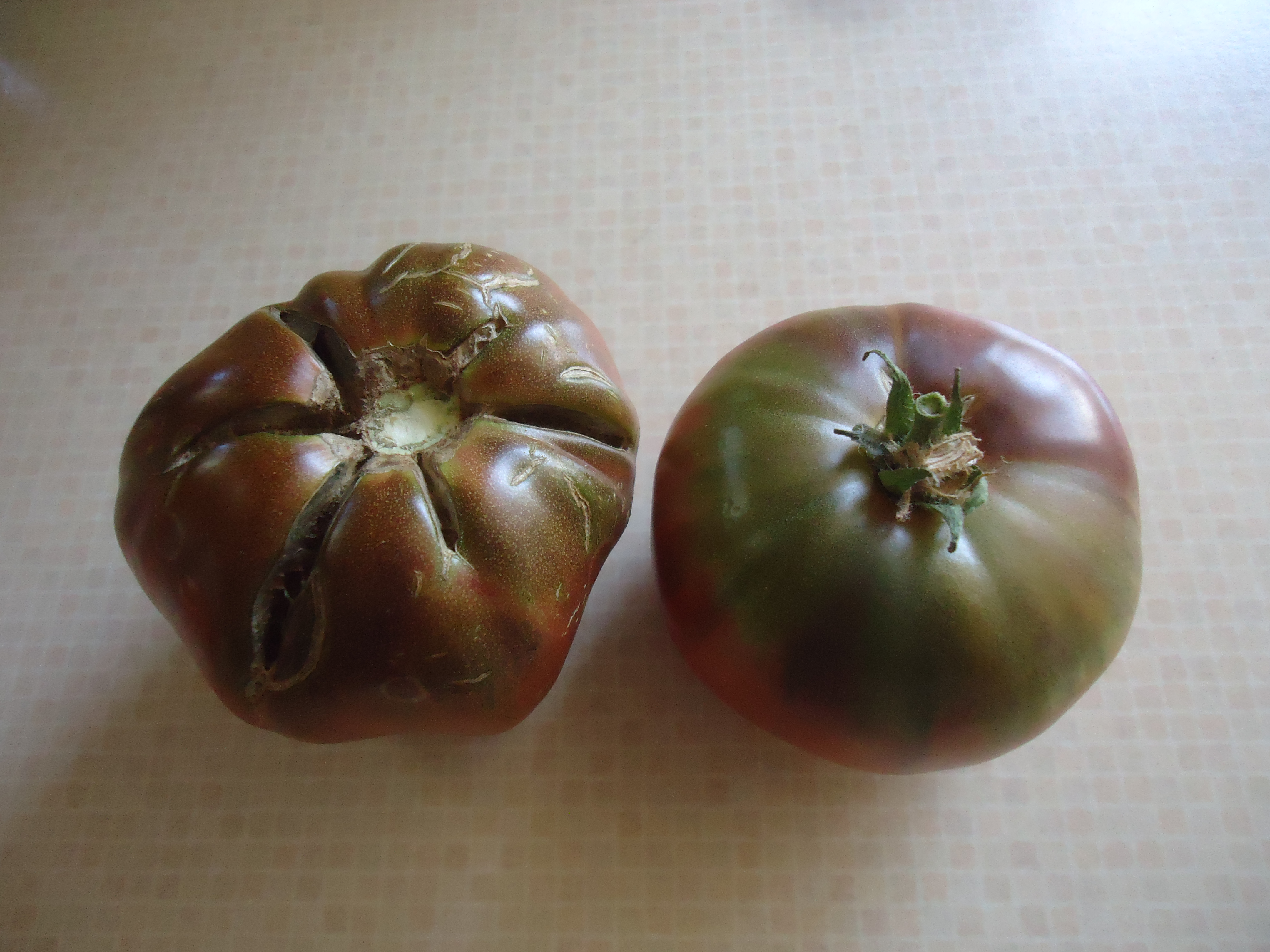 Cherokee Purple Tomato-A Chefs Favourite & How to Save Seeds - That ...