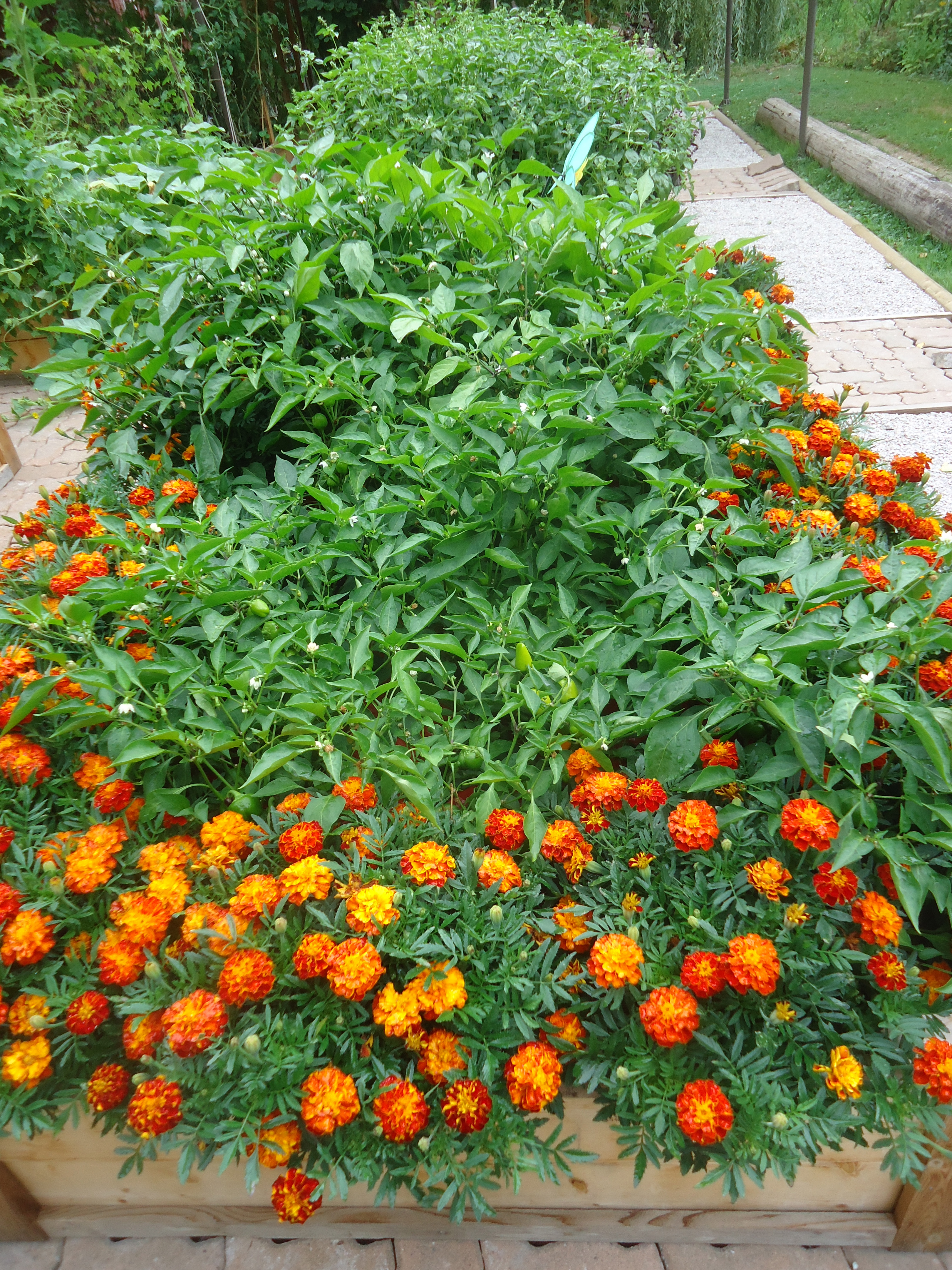 Kitchen Garden Seeds My Successes And Failures In The Kitchen Garden That Bloomin Garden