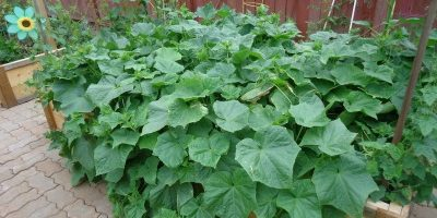 Want to Plant a Vegetable Garden? Read This First!