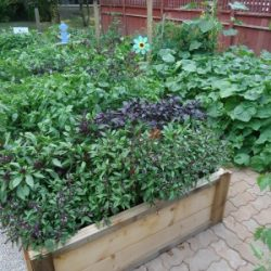 Planning for Crop Rotation in the Organic Garden