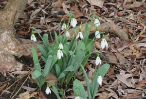 February Blooms and Tasks in the Garden