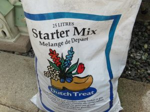 How to Grow from Seed for Beginners