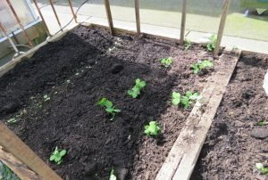 Seven Crops to Plant Now in the Vegetable Garden