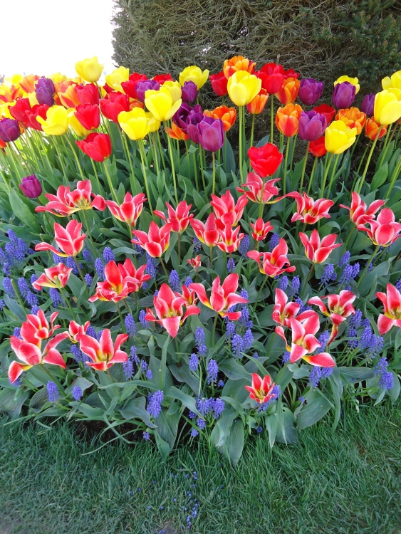 It's Time to Plant Spring Bulbs!