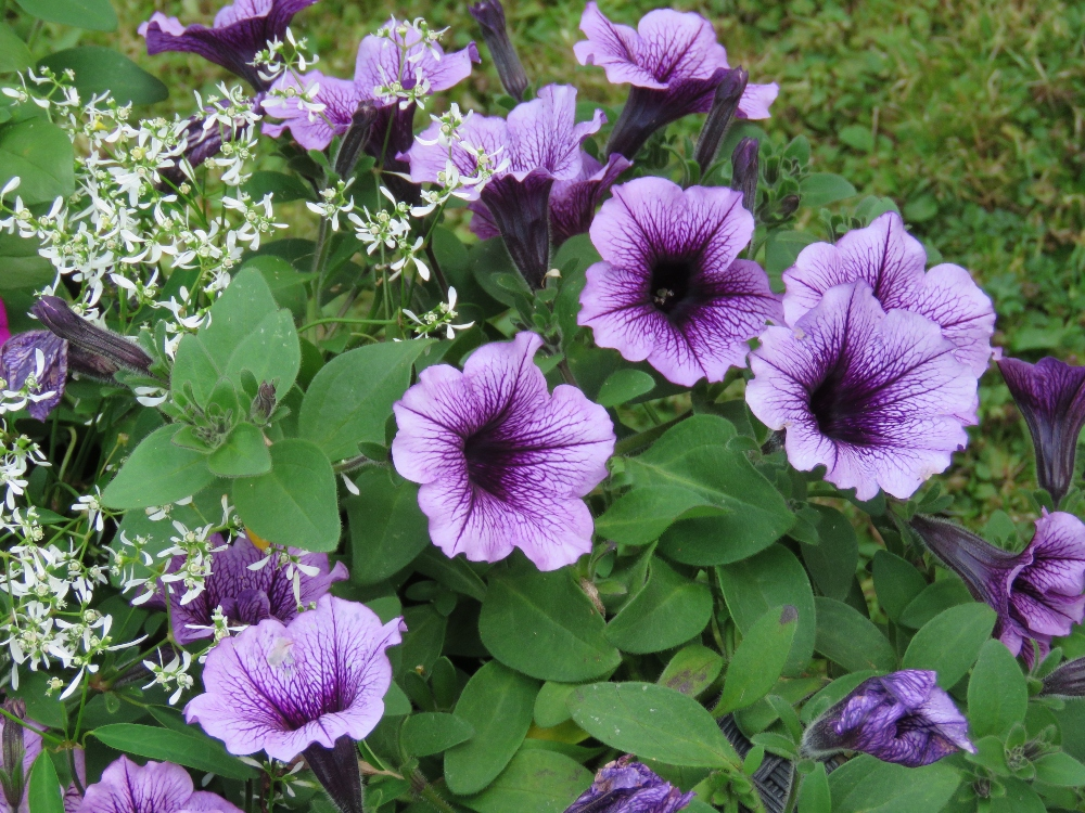 Amazing Flowers You Really Need to Grow!