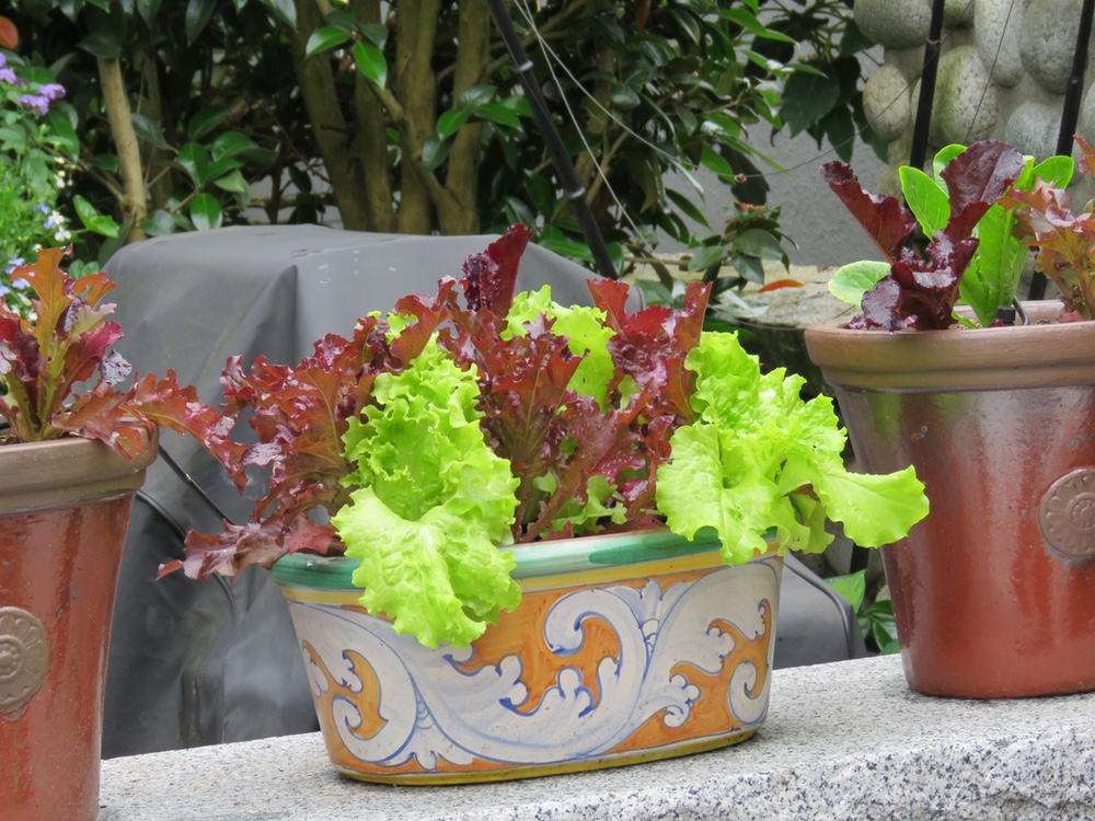 Small Space Vegetables for the Container Gardener