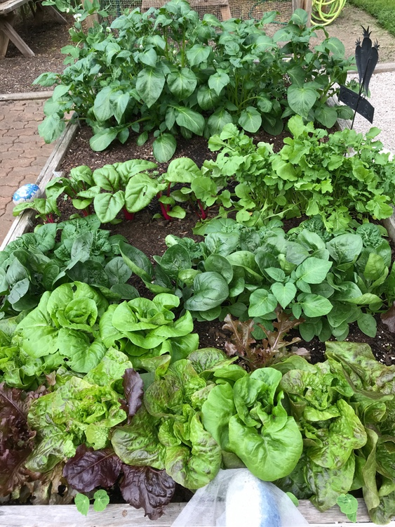 Transitioning from Spring to Summer in the Vegetable Garden