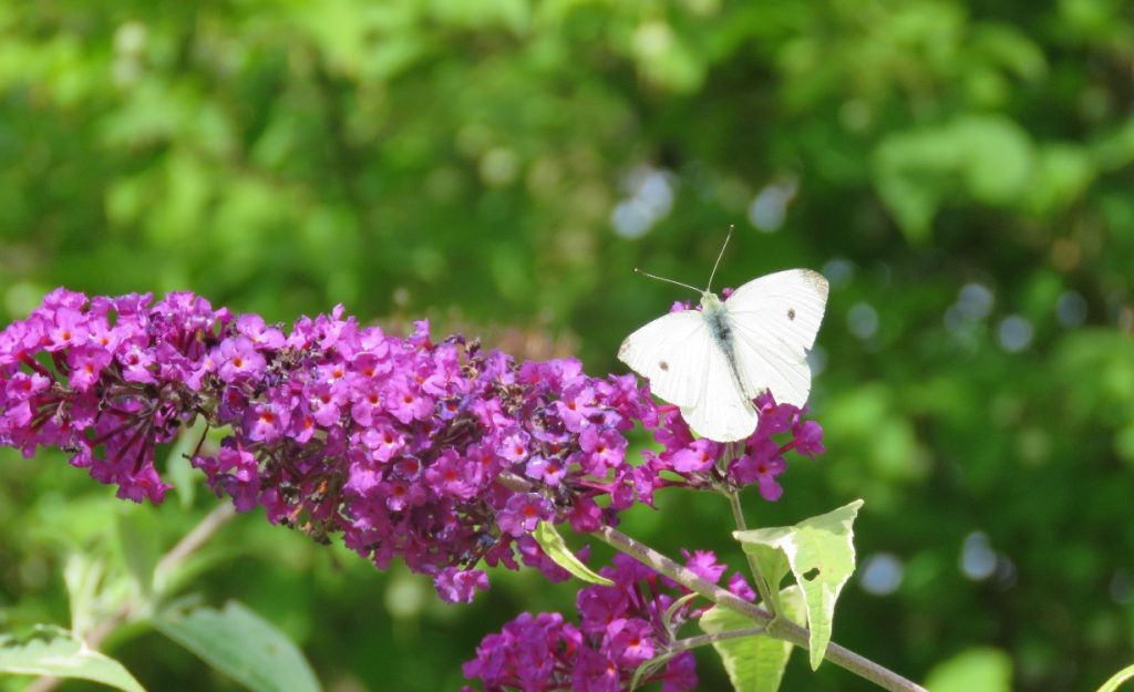 Common Pests in the Home Garden